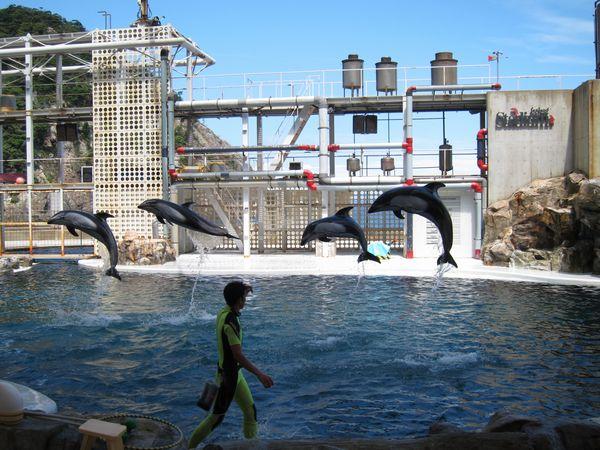 イルカとアシカのショー