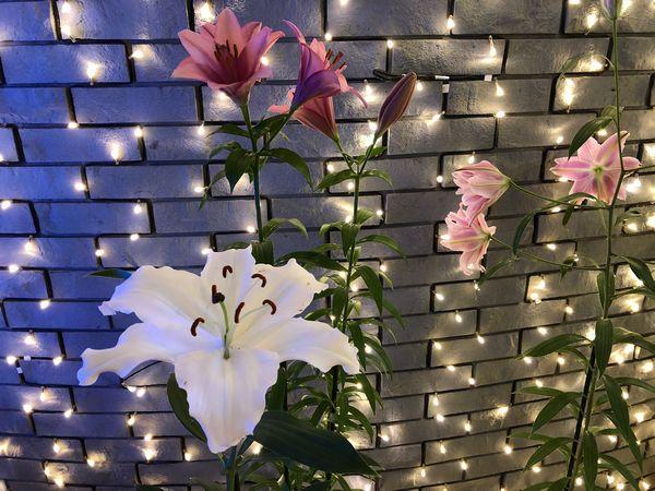 入り口のイルミと百合の花