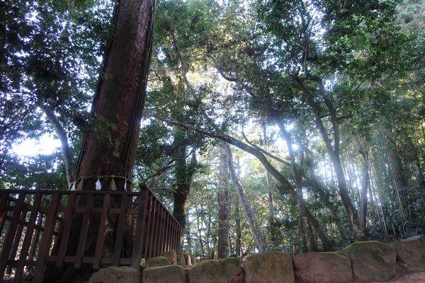 八重垣神社鏡の池エリア