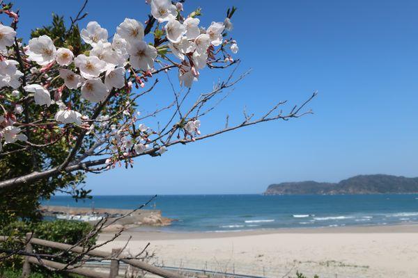 これぞ春の海! 桜もきれいでした