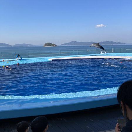 瀬戸内海を背景にイルカのジャンプ