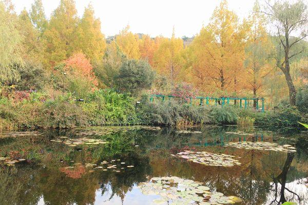 水の庭の睡蓮池