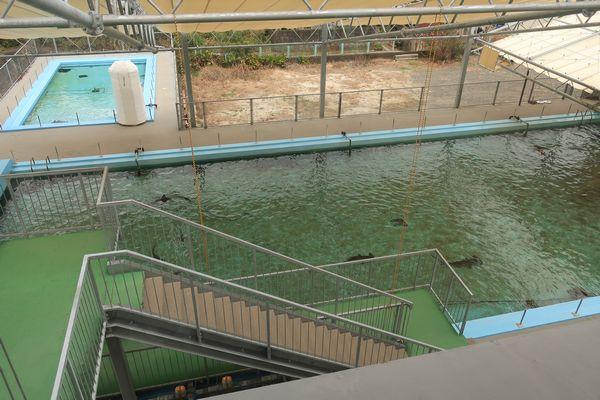 プール水槽