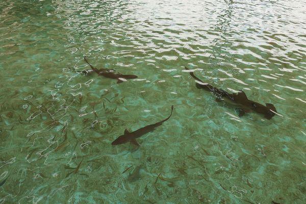 プールのサメたち